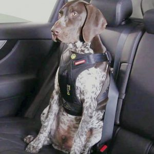 Pet With Seat Harness