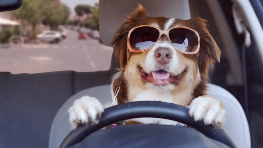 Learning How To Travel Safely with Your Pet