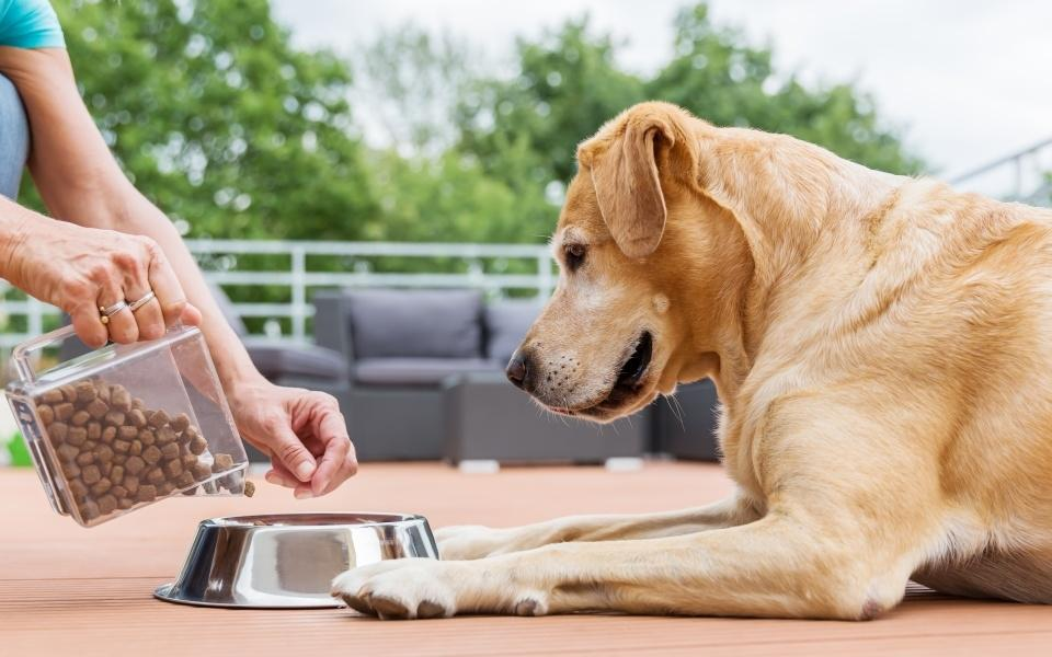 Choosing The Best Diet For Your Dog