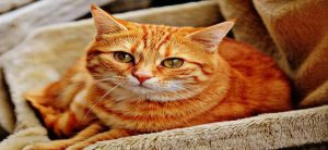 The Importance of Understanding Your Cat